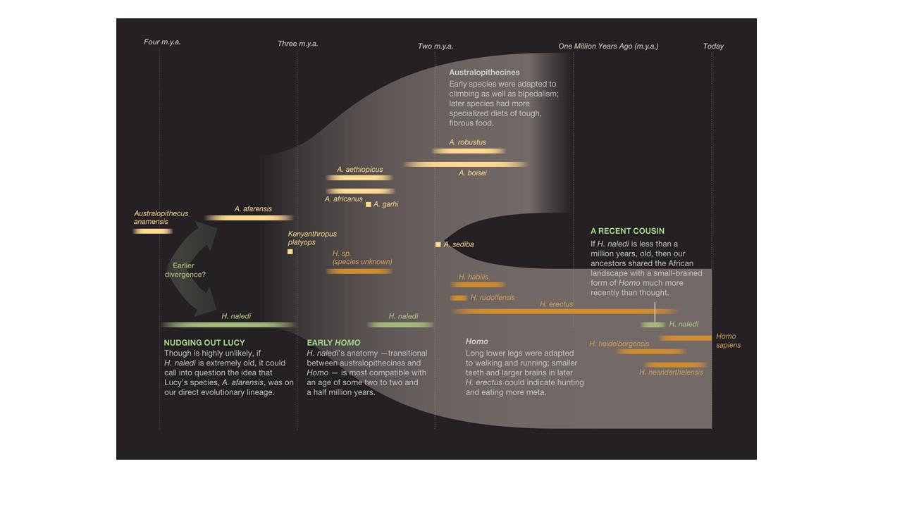 YSH Human History of Evolution